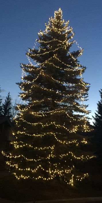 outdoor lighted tree
